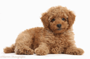 POODLE Vulnerability discovered in SSL 3.0